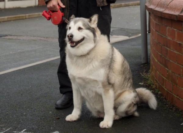 Животные: Английский суд собаку оправдал по делу о нападении, потому что она слишком толстая