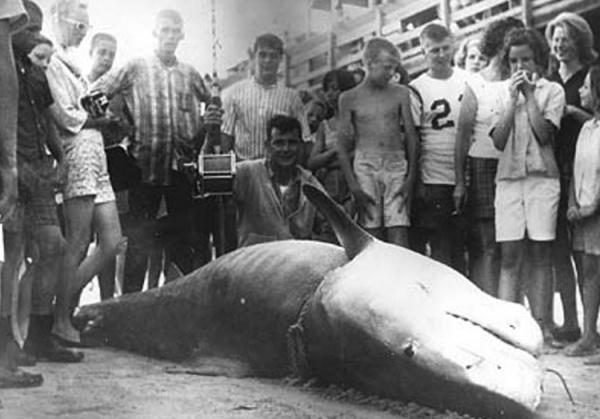Интересное: Самые большие пойманные акулы