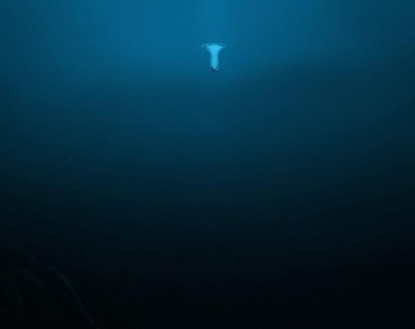 Интересное: Водный мир