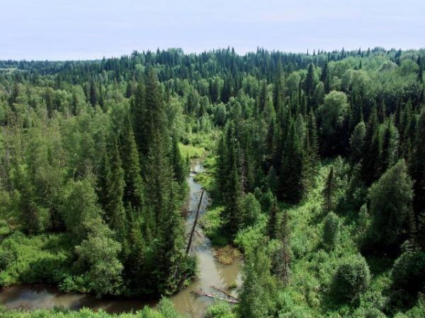 Природа: Русская тайга
