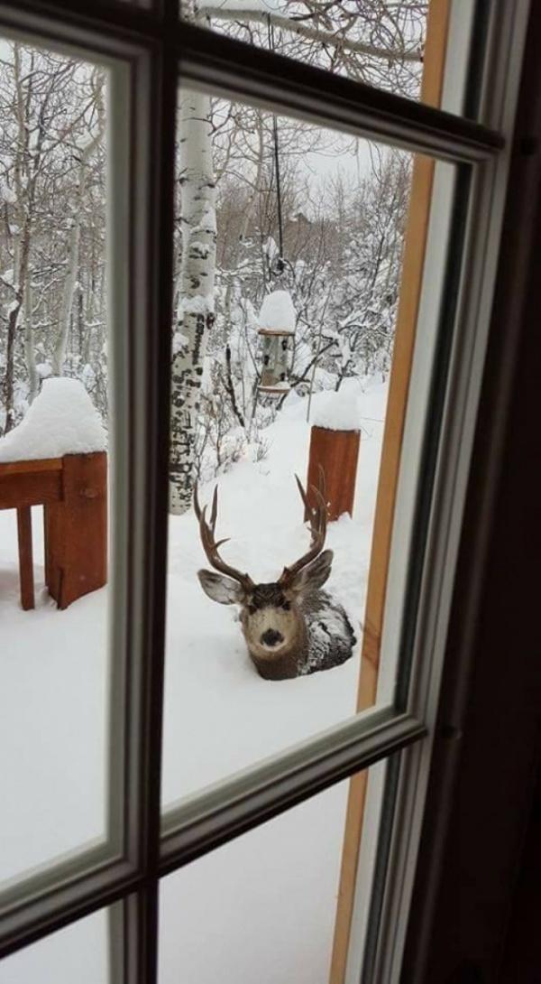 Природа: Зимушка-зима