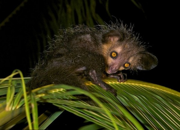 Животные: Самые редкие животные