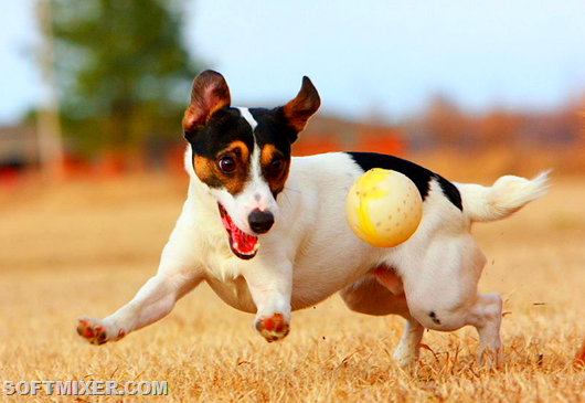 Животные: Интересные факты о собаках