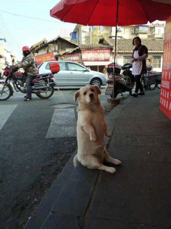 Животные: Постигает дзен