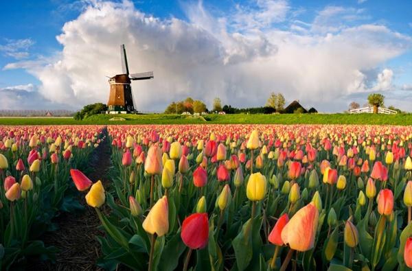 Страны: Нидерланды и Голландия - это одно и то же?