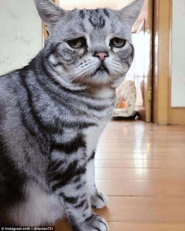 Животные: Луху - самая грустная кошка