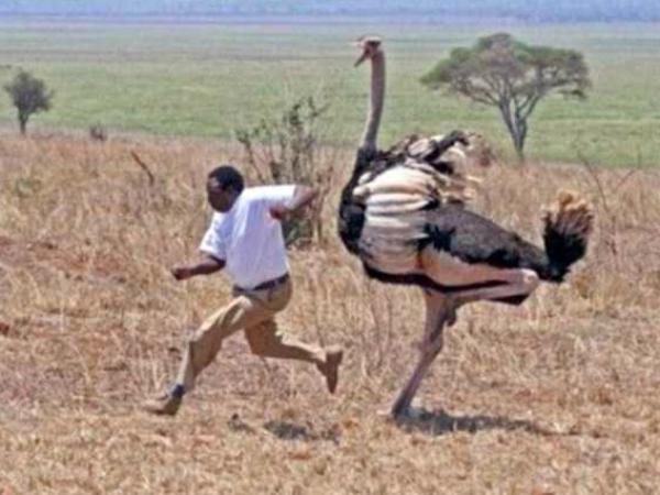 Интересное: Не ходите, дети, в Африку гулять