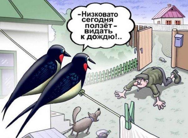 Юмор: Птичий юмор