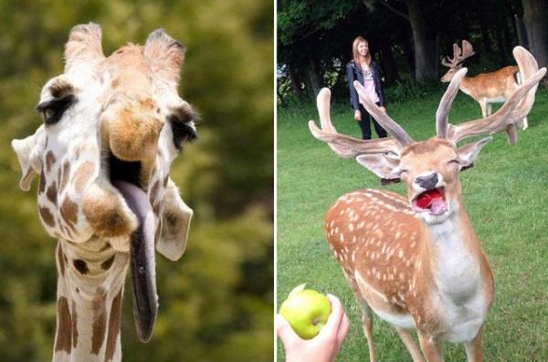 Животные: Удачные кадры