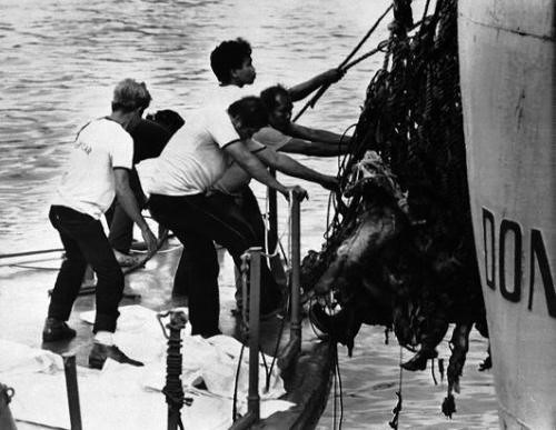 Происшествия: Крупнейшее кораблекрушение в мирной  истории