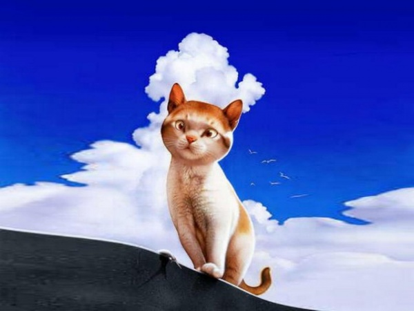 Картинки: Котики
