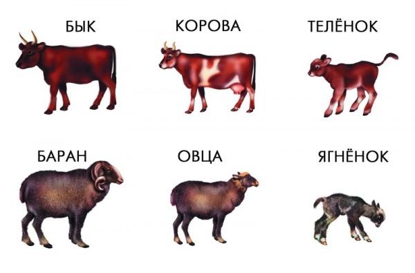 Интересное: Происхождение названий животных