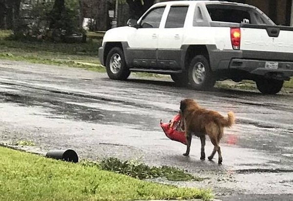 Животные: Пес спас младенца