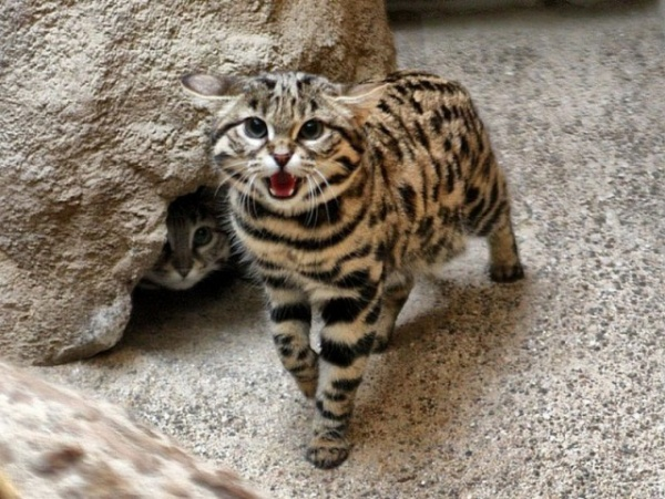 Животные: Редкие и малоизвестные животные