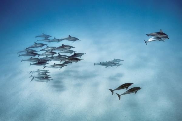 Природа: Живая природа от National Geographic
