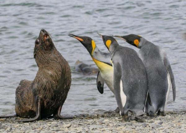 Животные: Смешная живая природа