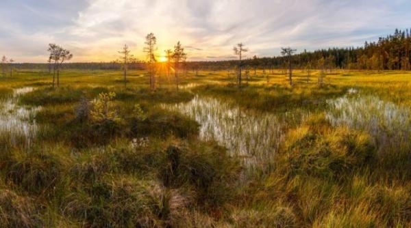 Интересное: Откуда в европейских болотах тысячи зверски убитых людей
