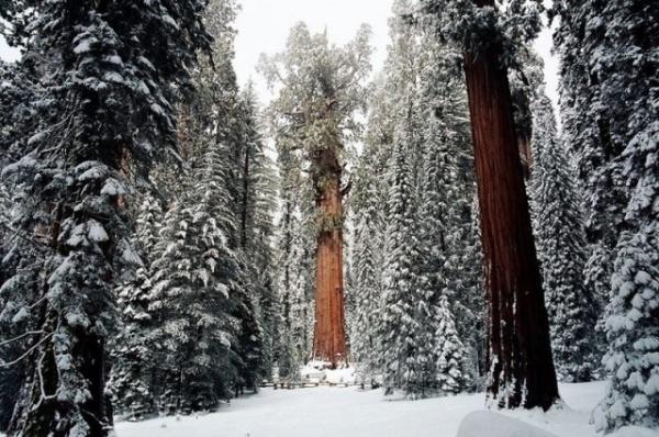 Природа: Фотографы потратили 32 дня, чтобы сфотографировать это дерево целиком