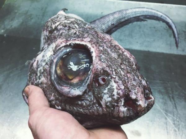 Интересное: Глубоководные монстры (часть 1)