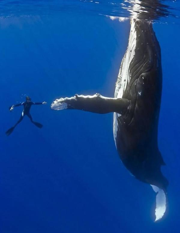 Животные: Как спят киты