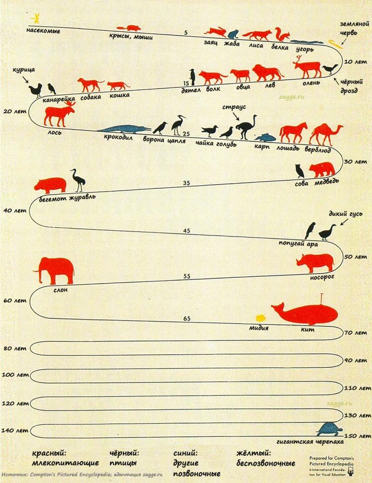 Животные: Сколько живут животные
