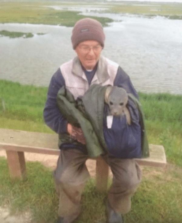 Животные: Как коровы тюлененка спасли