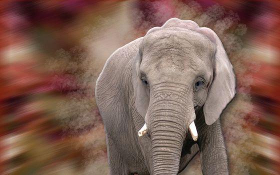 Животные: Интересные факты о слонах