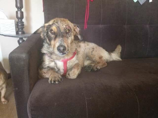 Животные: Собака, застрявшая в смоле, отчаянно звала на помощь несколько дней, пока её не услышали