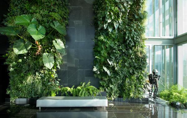 Реклама3: Вертикальное озеленение своими руками - советы по ландшафтному дизайну в Воронеже и не только