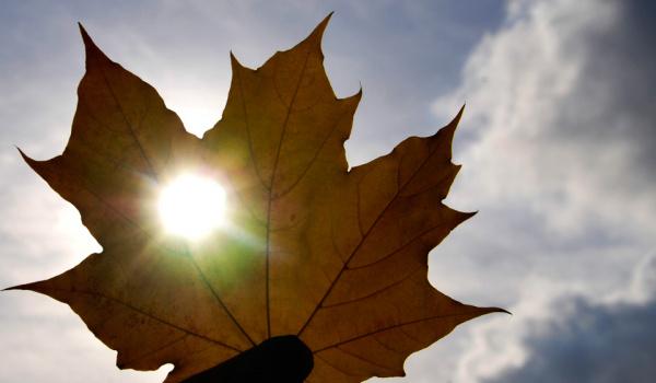 Природа: День осеннего равноденствия