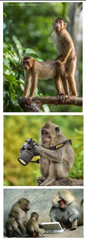 Картинки: Интересные и смешные картинки на вторник