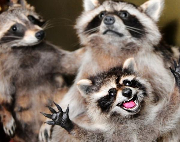 Животные: Позитивные животные