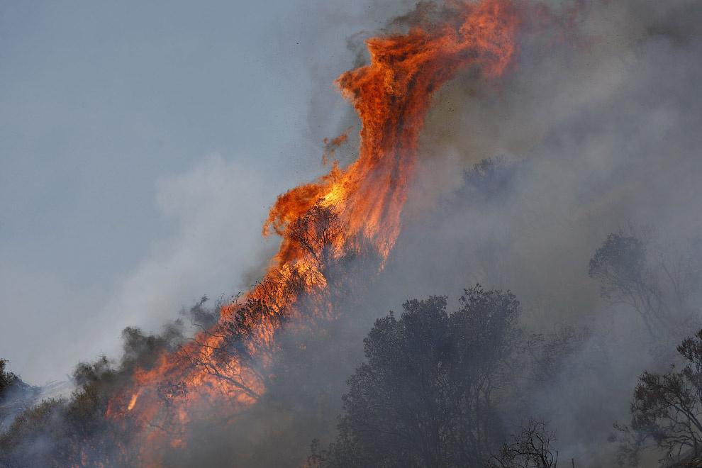 Картинки самый страшный лесной пожар