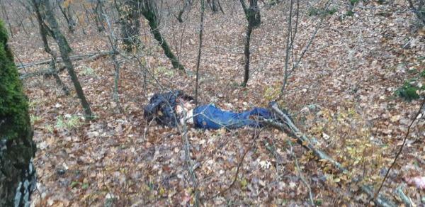 Происшествия: Под Новороссийском в Абрау-Дюрсо взорвался и упал частный вертолет