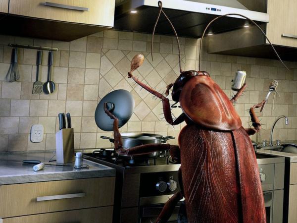 Блог djamix: В Красноярске впервые прооперировали таракана