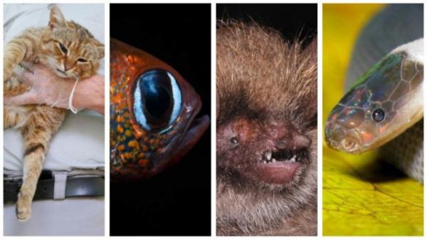 Животные, открытые в 2019-м году