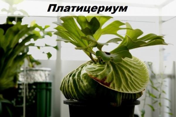 Природа: Удивительные и интересные растения