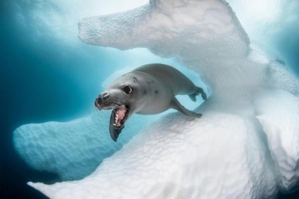 Природа: Фантастика подводного мира