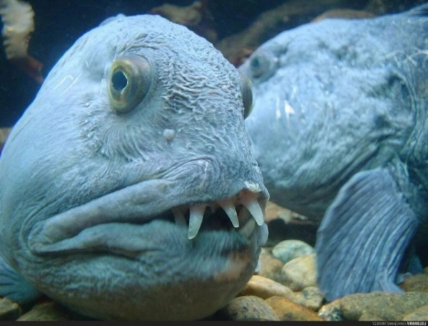 Интересное: Почему эту рыбу продают без головы