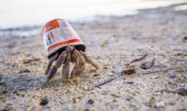 Природа: Конкурс подводной фотографии 2020