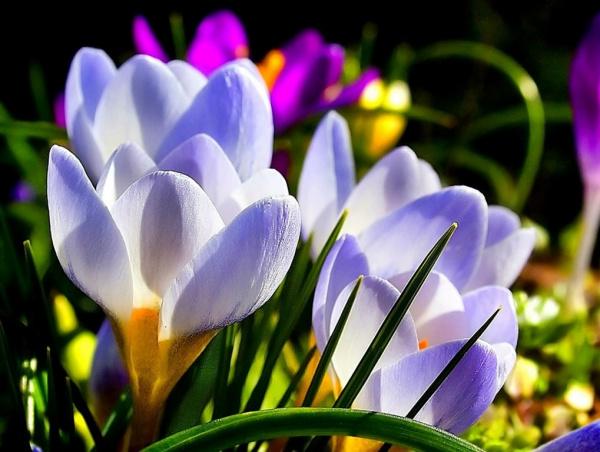 Даты: С первым Днем Весны!
