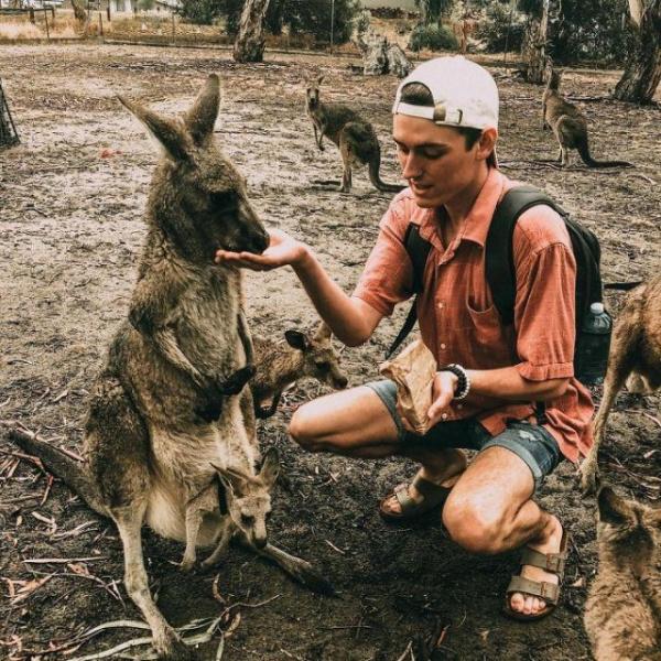 Безумный мир: Американец по-пьяни усыновил кенгуру
