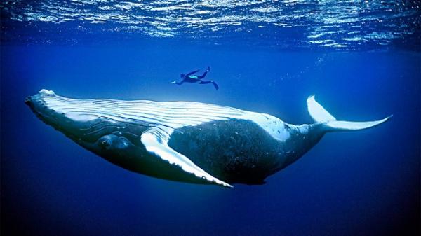Интересное: Откуда дельфины и киты получают пресную воду?