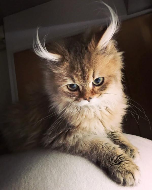 Животные: Самые красивые кошки