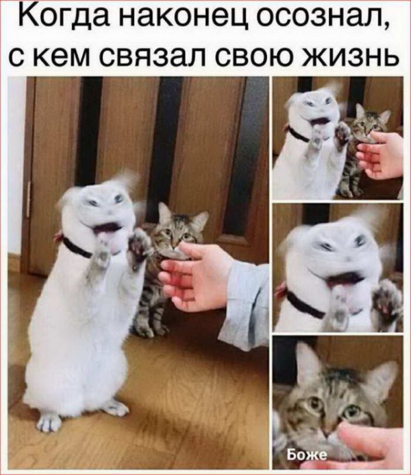 Юмор: Новая подборка очень смешных картинок :-)