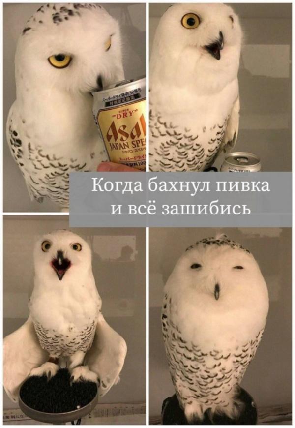 Юмор: Смешные и интересные картинки