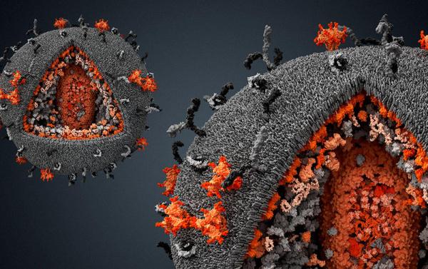 Интересное: Что такое вирус с научной точки зрения