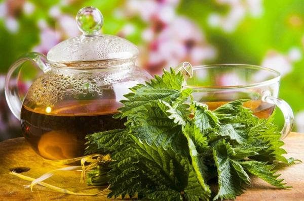 Полезные советы: Использование крапивы в медицине и кулинарии