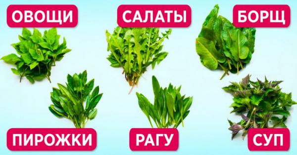 Полезные советы: Съедобные и полезные сорняки