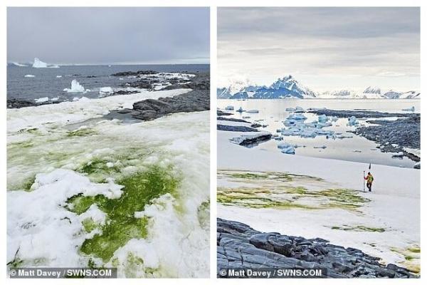 Природа: Антарктида начинает зеленеть